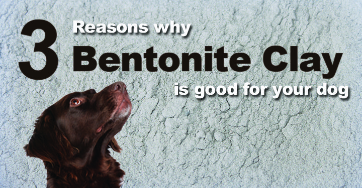 """Bentonite is a negatively charged, highly absorbent clay. Native American tribes call bentonite 'Ea-Wah-Kee' which means """"the mud that heals"""".  There are different types of bentonite clay, depending on the dominant mineral within it (sodium, calcium, …"""