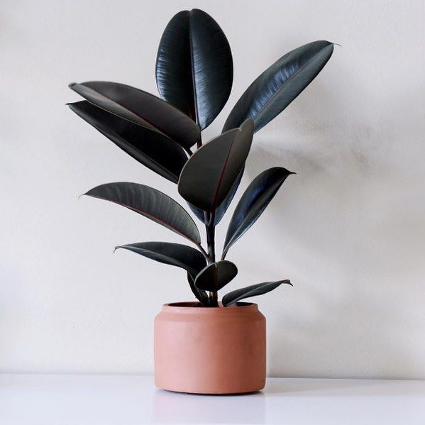 Arrange your plants in our minimalistic pots with geometric details. The pots are made of concrete and are suitable for both indoor and outdoor use – available in six different size variations and three colours.#regram @simplestplants