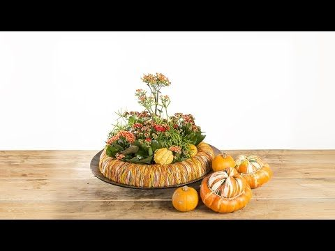 Kalanchoe Pumpkin Ring   Flower Factor How To   Plant Creation - YouTube