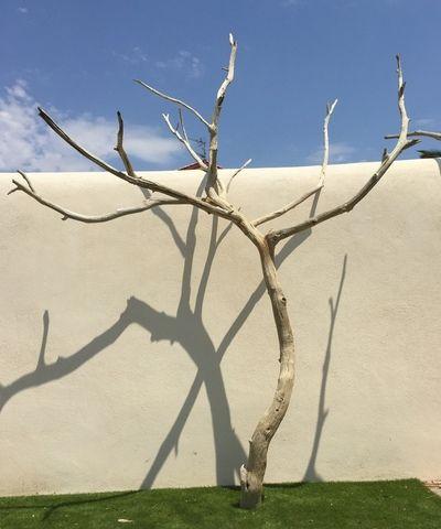 arbre mort ref 152