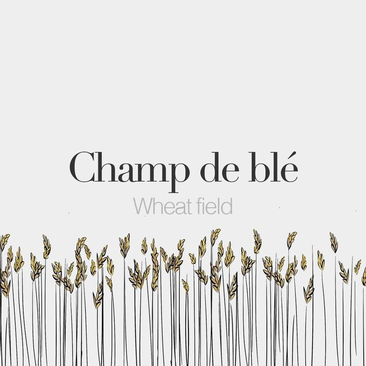 Champ de blé (masculine word) | Wheat field | /ʃɑ̃ də ble/ Drawing: @beaubonjoli.
