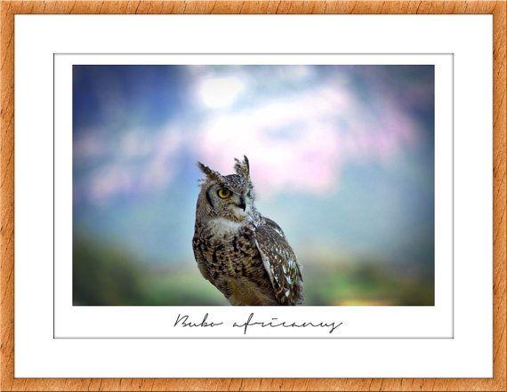 Owl photo, wildlife and nature photography, digital image, Fine Art Print, Birds of Prey. Raptors. Horned Owls, woodland animals wall art   Owl print photo, woodland, forest photography. Fotografía de un búho. Recibirás una foto en formato digital disponible para imprimir en cualquier formato, aunque recomiendo imprimirlo en 50cmx75cm. Si quieres ver otra foto de búhos: http://etsy.me/2iwuGdO Esta fotografía está pensada para decorar cualquier espacio :)