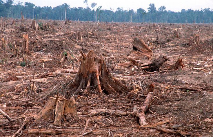 Un bosque muerto en la provincia de Riau, en Sumatra, Indonesia.   Créditos: World Wildlife Fund   Canon.