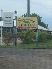 To touch n swim with the turtles in Savaii Samoa