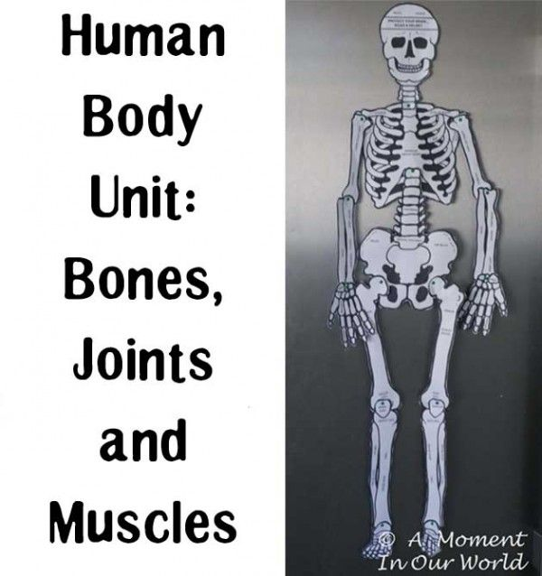 Human Body Unit Bones Joints and Muscles