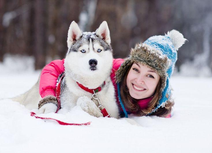 Sibirien Husky im Schnee
