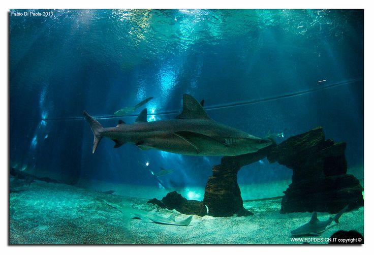 #AcquariodiGenova vasca #squali