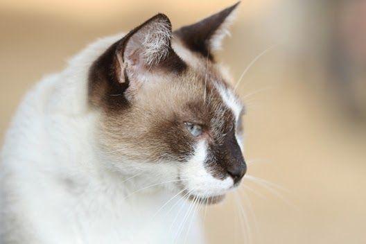 Mokre karmy dla kotów