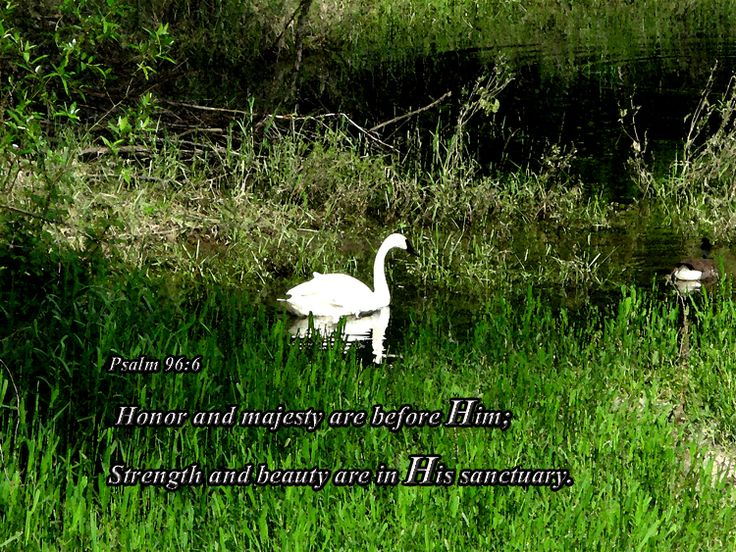 Image result for psalm 96:6