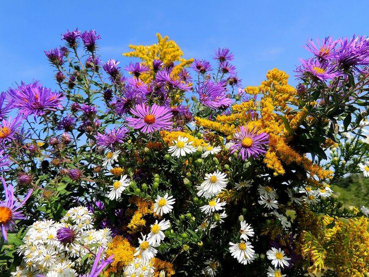 Michigan Wildflower Beauty My favorite flowers