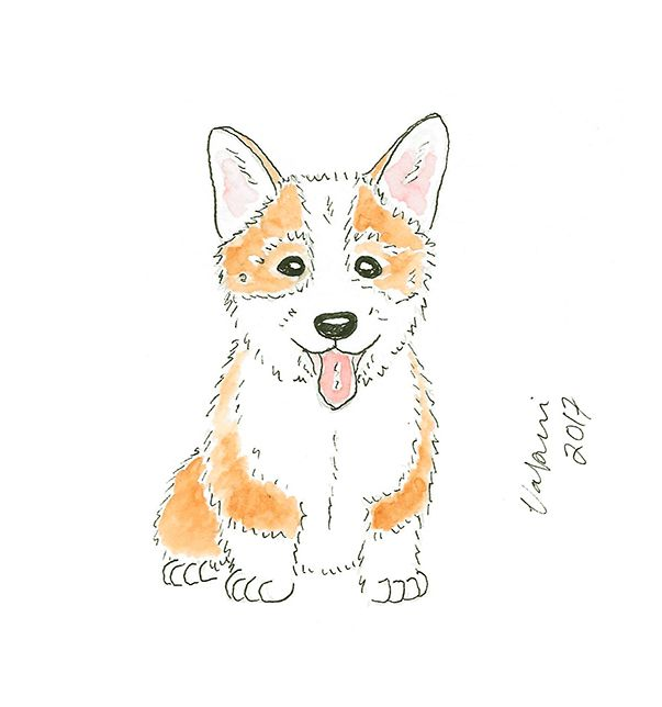Corgi puppy aquarelle. Tools used Winsor & Newton watercolors and Staedtler pigment liners