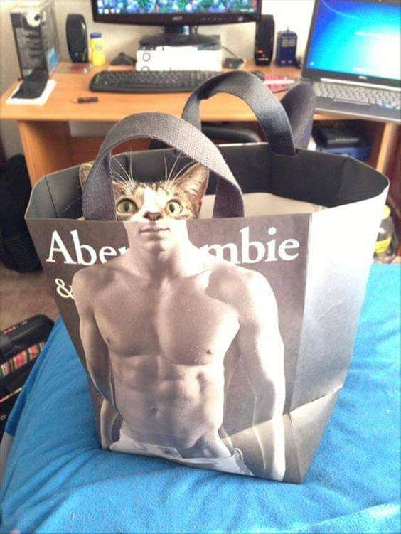 Cat in a Abercrombie bag - more at megacutie.co.uk