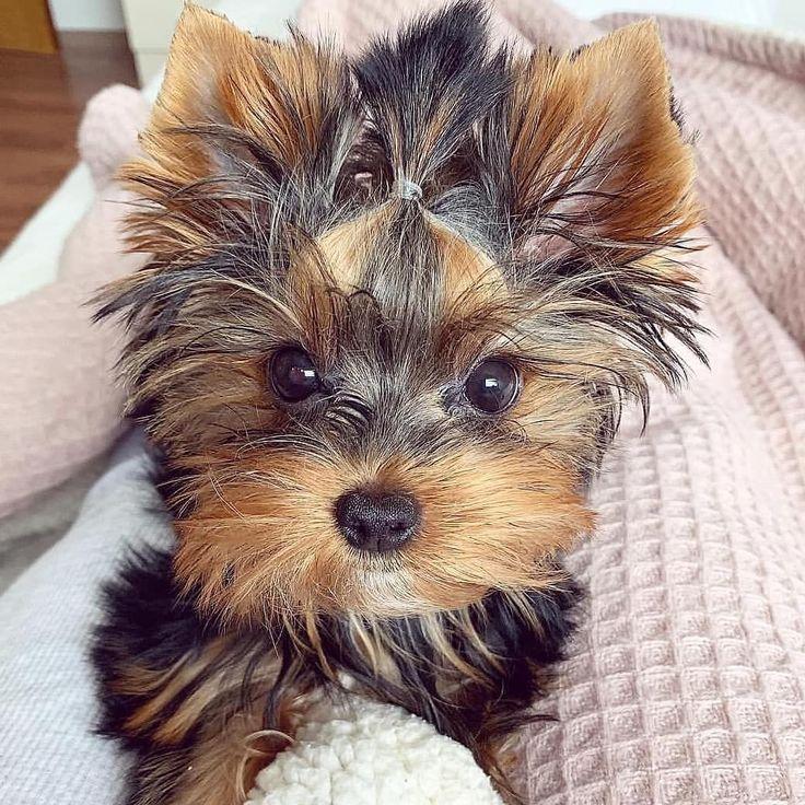 Pin Auf Pups
