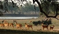 Best of Zambia. You will be met at Lusaka Airport and escorted onto your domestic flight to Mfuwe. This flight will take an hour and will transport you into what is considered to be the country's best gameviewing area. You will be met by your safari guide at Mfuwe Airport and driven to camp in time to settle in before brunch.