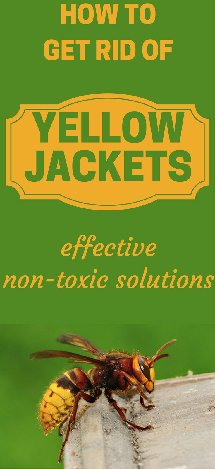 Yellow jackets in ground best way to kill - Best 25 Yellow Jacket Wasp Ideas On Pinterest Wasp Insect Wasp And Yellow Jackets