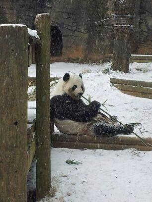 Snowing at the Atlanta Zoo in January 2014