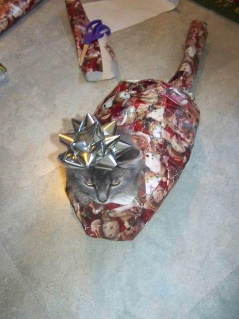 Bahahaha: Cat, Christmas Presents, Funny Stuff, So Funny, Funnystuff, Kitty, Wraps Paper, Merry Christmas, Christmas Gifts