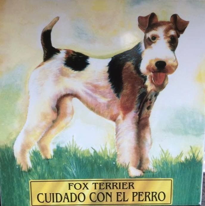1000  images about foxterrier  wire fox terrier  on