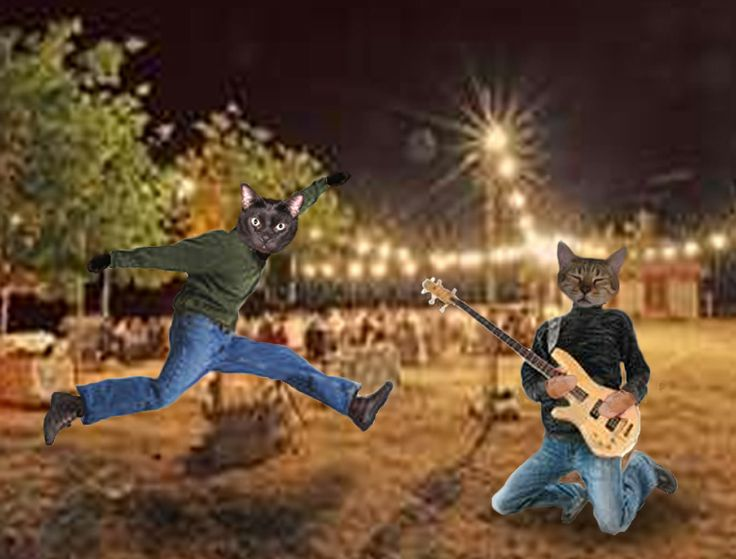 Our cats are jammin'!