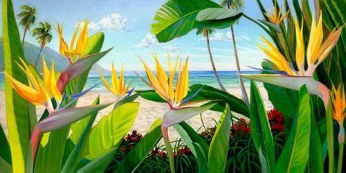steve simon artist   steve simon artist hawaii   Birds Of Paradise Print By Steve Simon