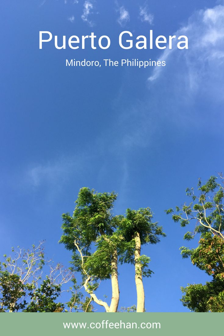 I was quite taken by these tall trees on Tamaraw Beach Resort  Puerto Galera Mindoro, The Philippines