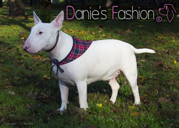Kockás kutyakendő http://daniesfashion.com/