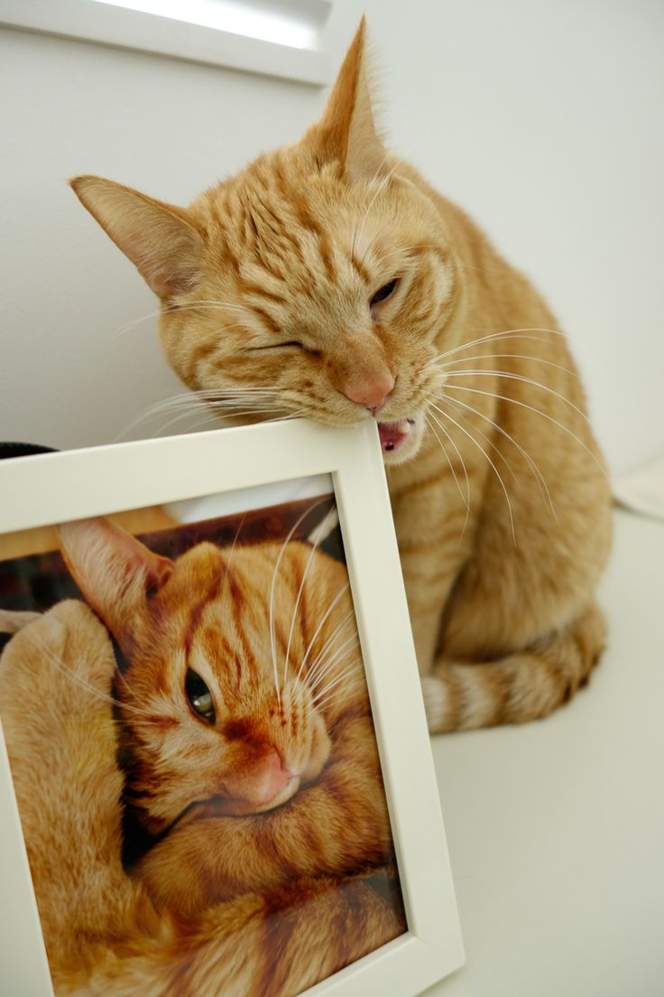 Kitty posing w/ his picture
