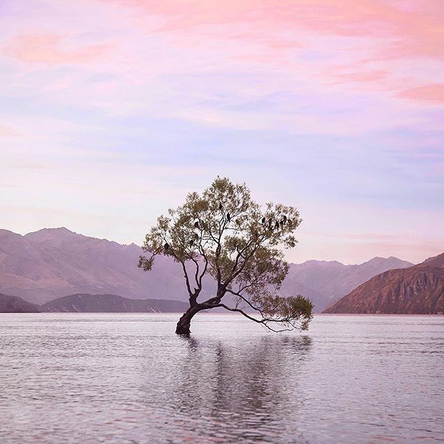 Lake Wanaka's lone tree... Surely this is the most photographic tree in New Zealand?!  Taken by #topdecker @lucila.godoy by topdecktravel