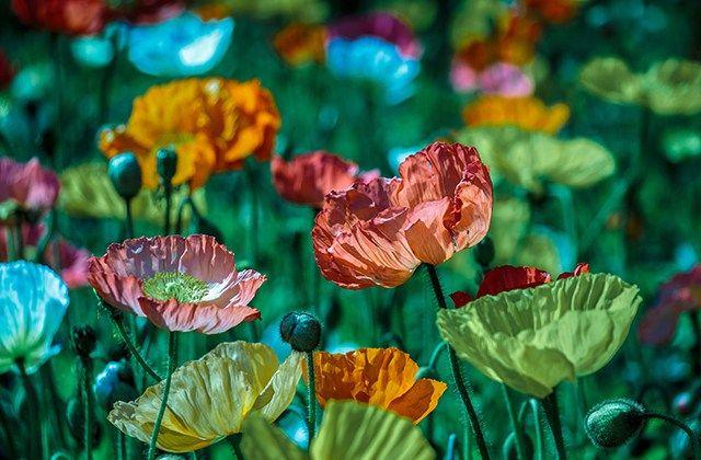 Frühlingserwachen auf der Garten München