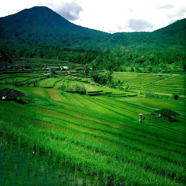 Terraços de arroz de #Jatiluwih - Fica nos arredores de #Ubud, #Bali