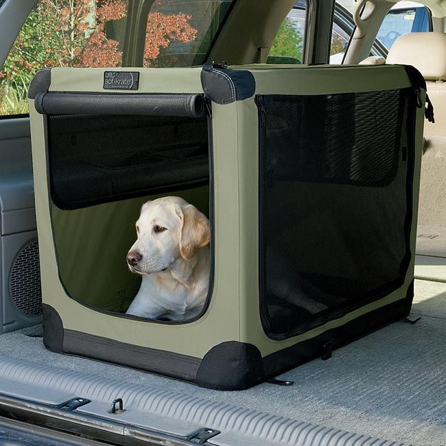 #5 – Do you take your dog on the road a lot?