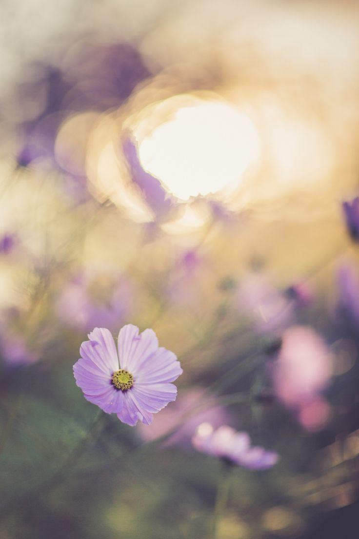 livraisons de fleurs pas cher  150 #fleurs #bouquet