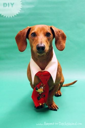 DIY Christmas Eve Outfit For Your Dog DIY Pets DIY Crafts