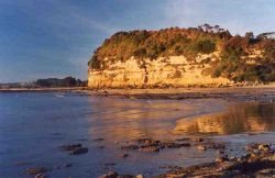 Fossil Bluff, Wynyard Tasmania