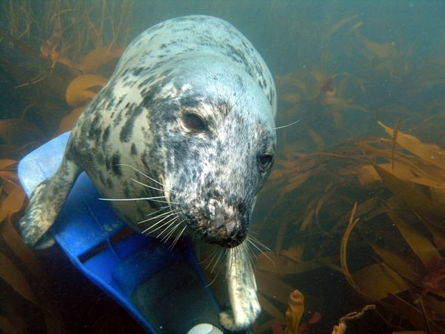 Seal on fin