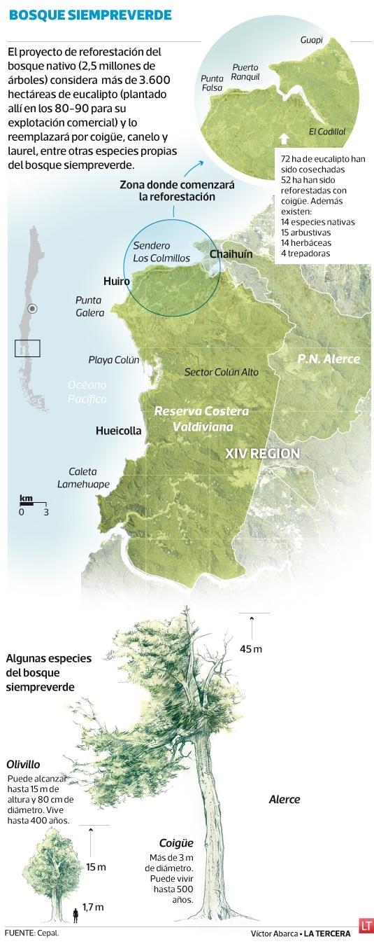 17 mejores imgenes de Flora nativa Chile en Pinterest  Chile