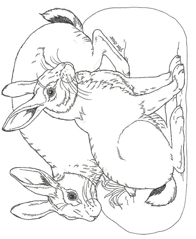 Bunny rabbit coloring pages facebook downloads click Coloring book subscription