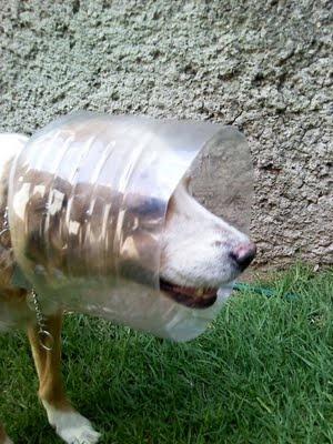 Proyecto Animal: Collar Isabelino casero para mascotas