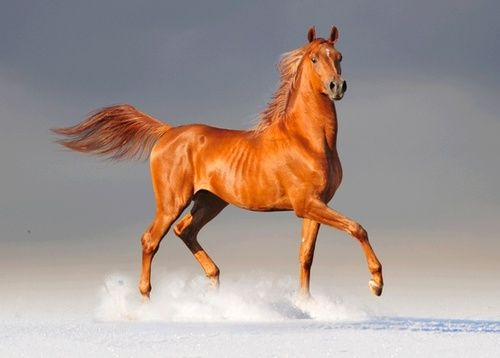 Prancing in the Snow