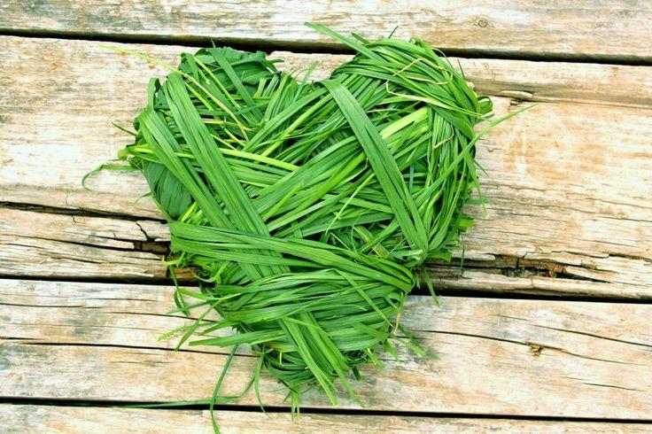 Srdíčko z trávy  Pro výrobu tohoto dekorativního srdíčka budete potřebovat především trávu. Nejvhodnější tráva pěkně dlouhá, můžete zkusit použít i mladé obilí. Jako základ srdíčka dobře poslouží srdce vystřižení z kartonu. Pak už jen stačí jej křížem krážem omotávat stébly trávy, dokud se vám nepodaří dosáhnout správného tvaru. Srdíčko pak můžete ozdobit kvítky a připevnit k němu stužku k zavěšení