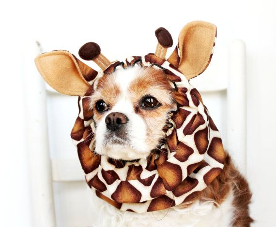 Giraffe Dog Snood / Pet Hat / Long ear covering / by daydogdesigns, $15.50