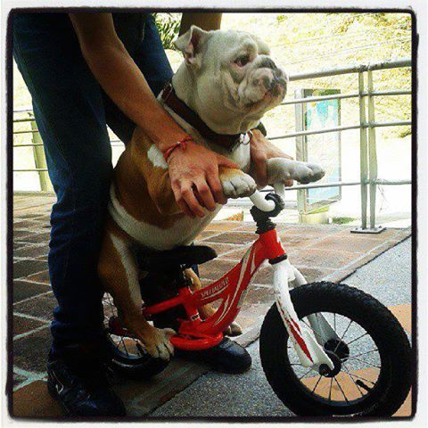 337 best group dogs bicycles everywhere pics of dogs in on 337 best group dogs bicycles everywhere pics of dogs in on or near bicycles images on pinterest bicycles bicycle design and bike stuff fandeluxe Epub