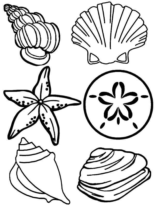 sea animals complete sea shells family coloring page