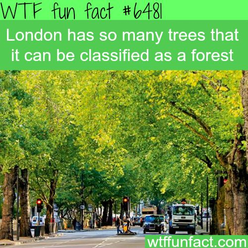 London can be classified as a forest - WTF fun facts | Follow @gwylio0148 or visit http://gwyl.io/ for more diy/kids/pets videos