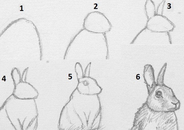 Let's Learn How To Draw A Rabbit. The Drawing Will Be Done In Six Steps.  First Step Involves Drawing A Simple… Realistic Drawings, Rabbit Drawing,  Animal Sketches