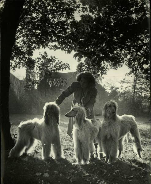 A trio of Afghan hounds in 1945. #afghanhound  (Interesting to see how the breed has developed.  I actually like the shorter fur; it's not as striking, but I prefer how it allows the beauty of their lines to show.