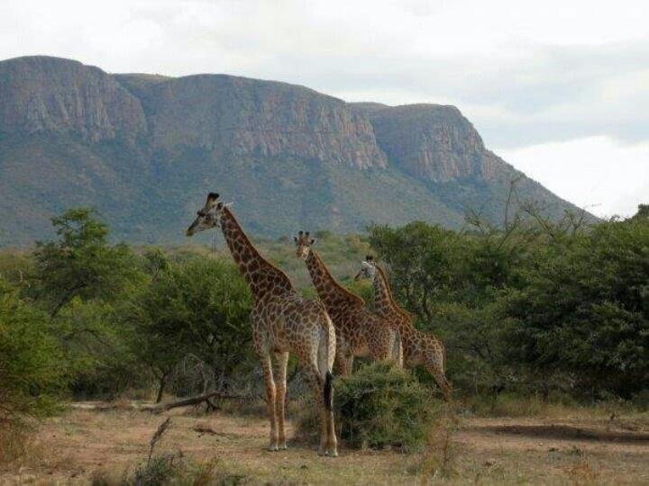 MOHOLOHOLO, SOUTH AFRICA