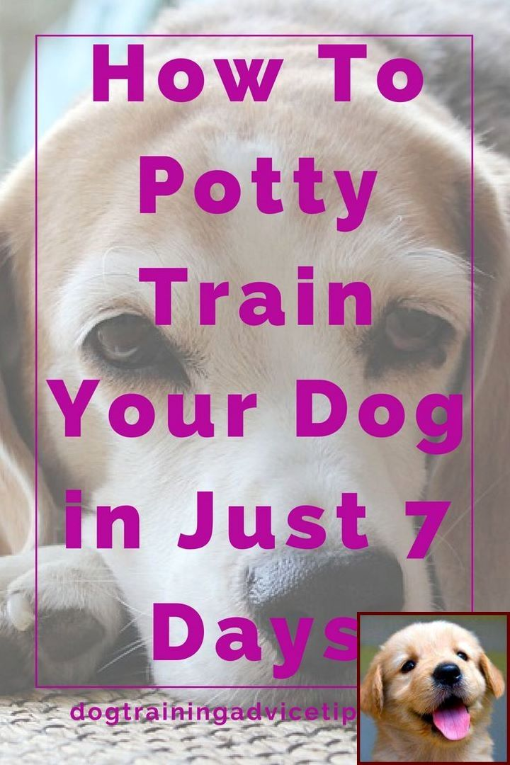 Potty Training A Girl Puppy And Dog Training Classes Plymouth