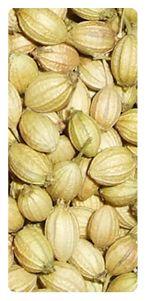 Coriander Seeds Exporters