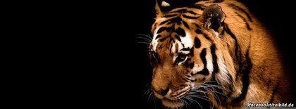 Tiger 412 Facebook Titelbilder
